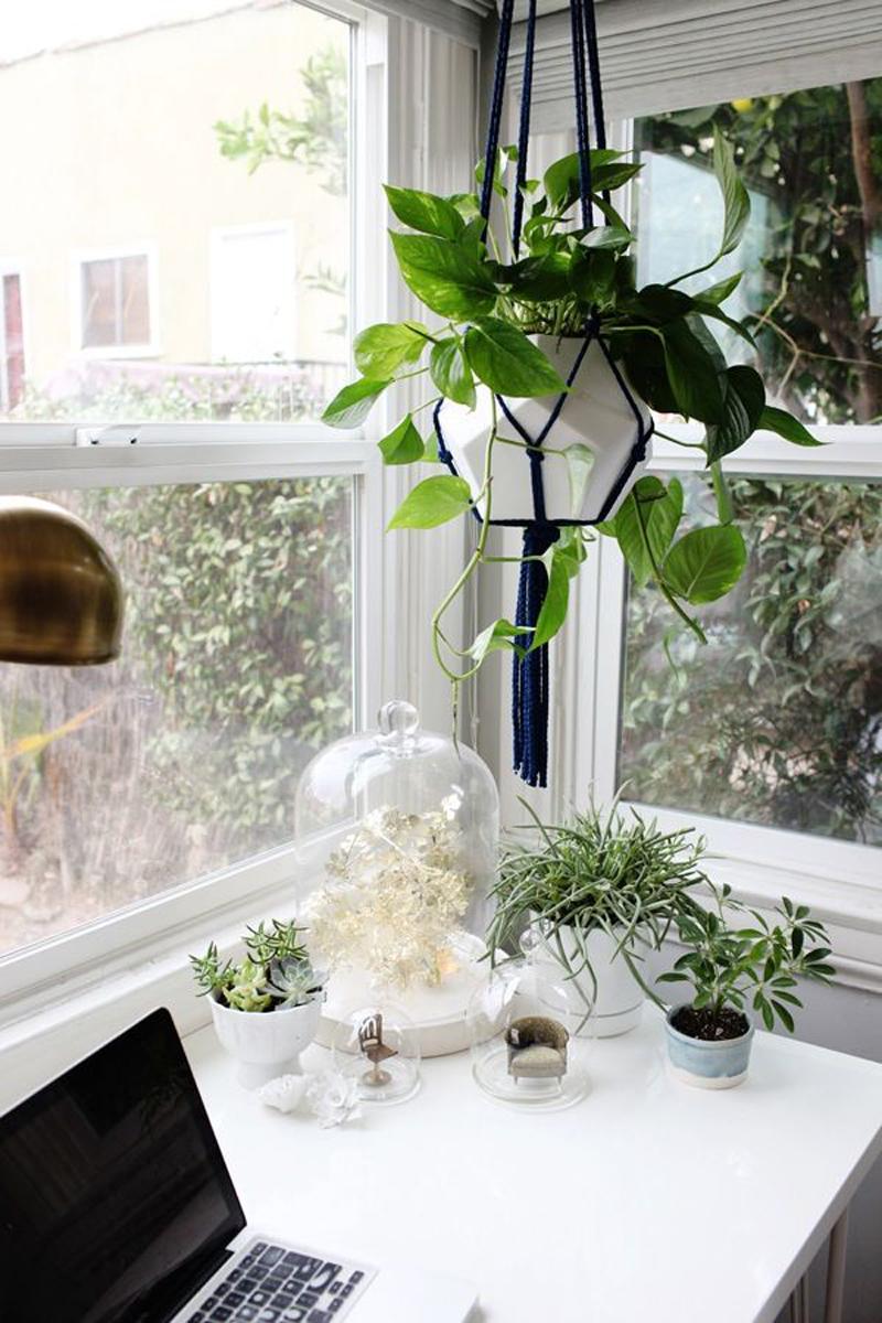 DIY Macramé Plant Hanger Ideas