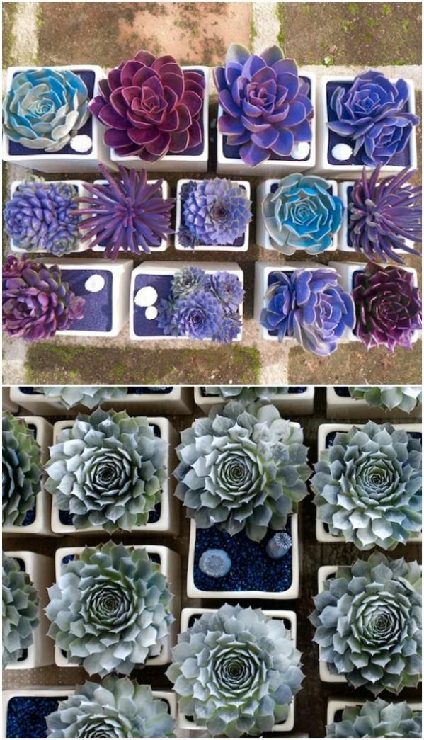 Ingenious Succulent Garden Ideas