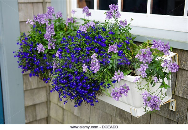 Amazing Flower Box Ideas