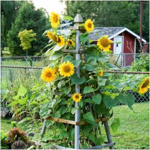 DIY Flower Towers