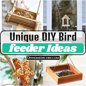 Unique DIY Bird feeder Ideas