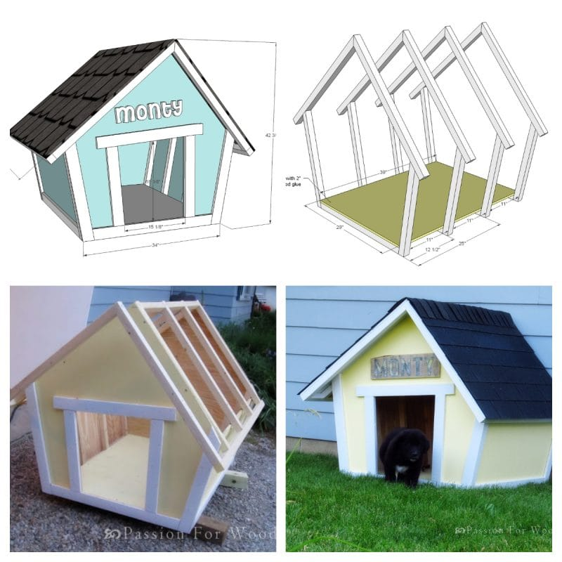 Cute Crooked Dog home